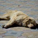 秘境ラダック観光の拠点レーの歩き方と注意点【インドのチベット】