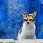 まるで絵本の中のおとぎの国、青の迷宮シェフシャウエン【猫だらけ】